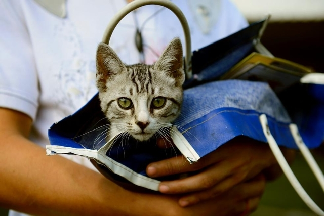 Rio interdit la chirurgie esthétique sur les animaux