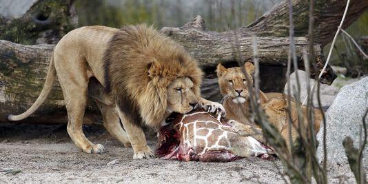 La directrice de Thoiry : « Un zoo n'est pas la SPA »