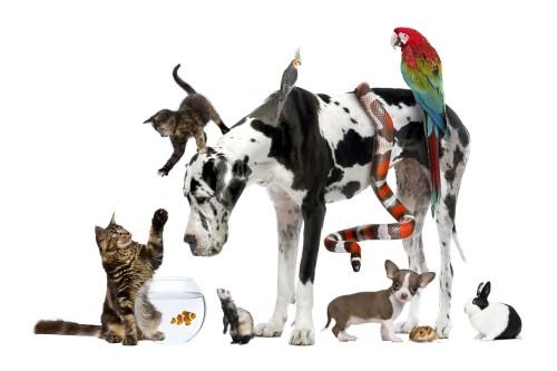 Ces animaux qui nous soignent