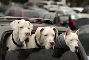 Plus d'espace pour les chiens et les chats en voiture