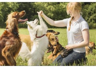 Garde d'animaux : un bon plan pour arrondir ses fins de mois ?
