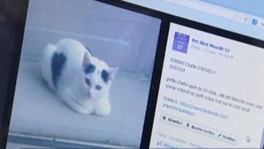 Pet Alert SOS animaux perdus