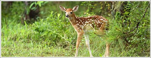 Protection - En période de naissances d'animaux, soyons vigilants en forêt !