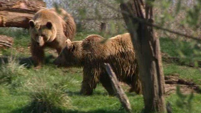 Réouverture du parc de Sainte Croix, marquée par les ours bruns