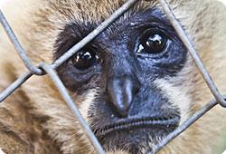 Agir - La Fondation au secours des animaux en Thaïlande