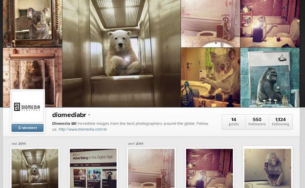 Les animaux font des selfies pour «National Geographic»