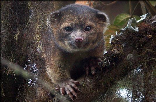 Chat-ours ou arbre-dragon, les 10 espèces les plus étonnantes découvertes