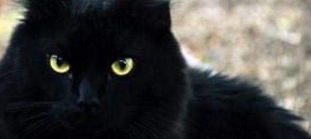 La longue marche du chat Suika pour retrouver ses maitres après le tsunami