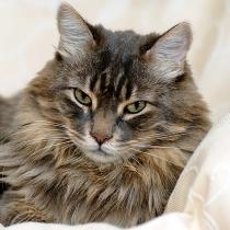 Comment gérer l'arrivée d'un nouveau chat ?