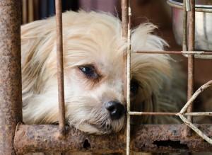 Témoin de maltraitance animale : que faire ?
