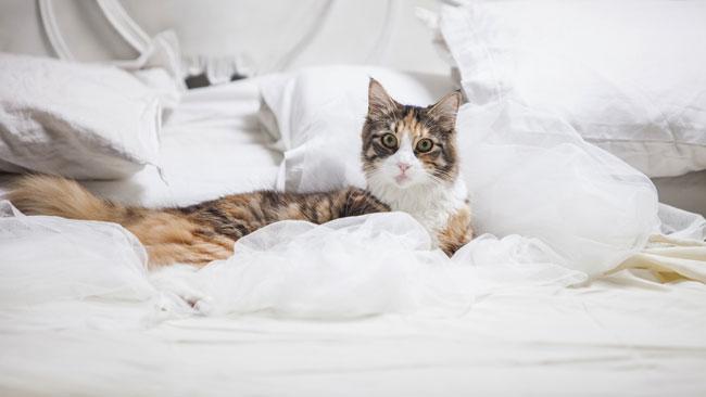 Des animaux de compagnie qui nuisent au sommeil