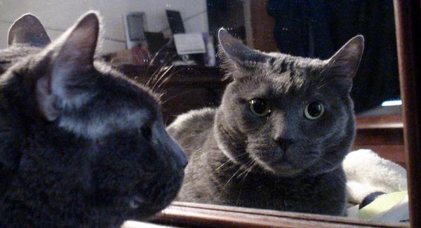 Que voient les animaux quand ils se regardent dans un miroir ?