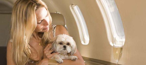 Comment voyager en avion avec un chien ou un chat?