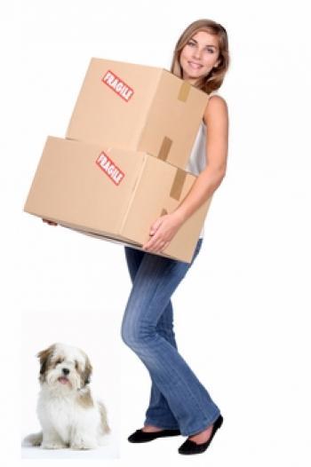 Un déménagement, stressant aussi pour l'animal