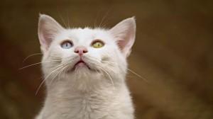 L'étrange disparition de 500 chats en Essonne