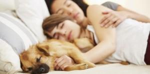 Dormir avec son chien ou son chat : quel risque ?