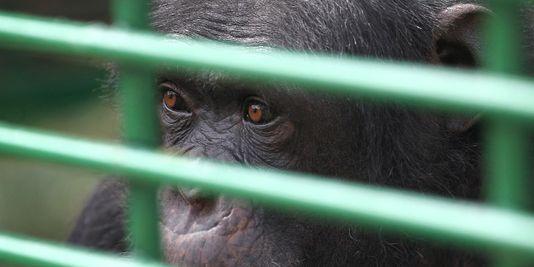 Malgré une nouvelle proposition de loi, le droit animal reste dans l'impasse