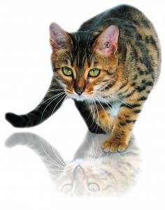 Les moustaches chez le chat ... un apanage précieux !