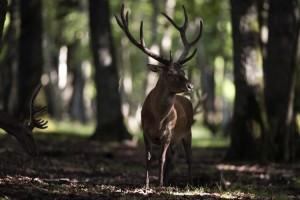 Une députée PS demande que le statut des animaux sauvages soit également révisé