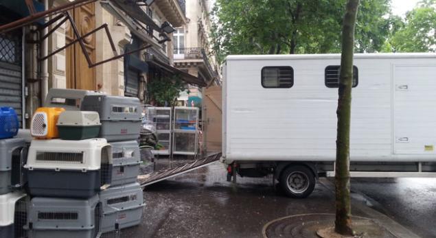 Trafic d'animaux : perquisitions dans plusieurs boutiques parisiennes