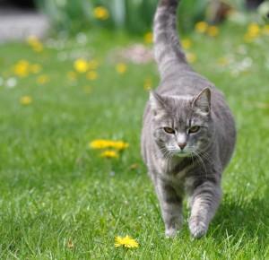 """Zurich pourrait lancer la politique du """"chat unique"""""""