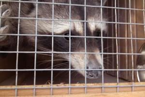 La Fondation évacue plus de 700 animaux près d'Aix-en-Provence