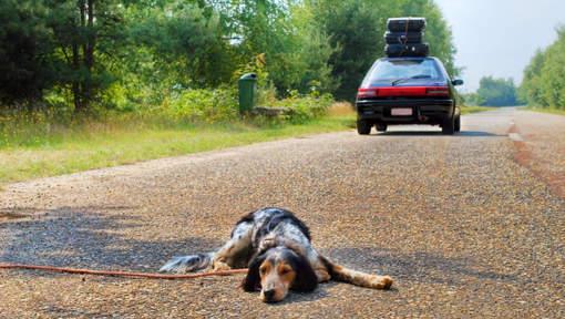 Les vacances, ses adoptions et ses abandons d'animaux