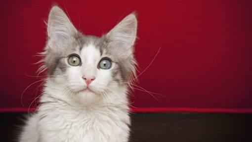 Un chat retrouvé après une balade de... 320 km