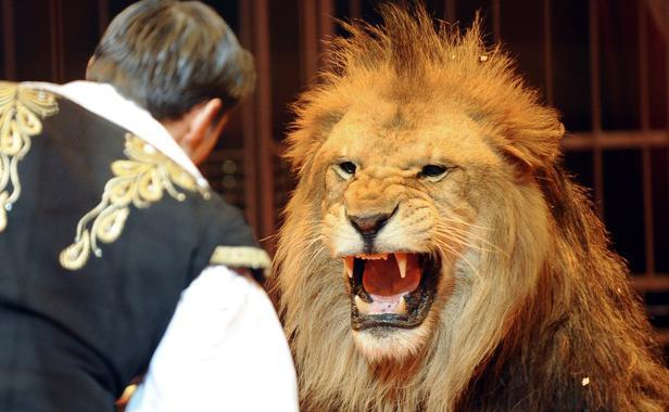 Cirque : Les animaux représentent-ils un danger ?