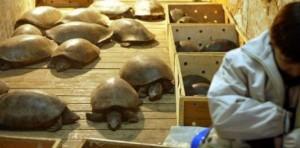 En Chine, les animaux menacés finissent encore à la marmite