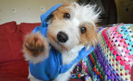 Sauvé, ce petit chien trop craquant est devenu une star du web