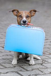 """""""Hôtels"""" ou nounous : les animaux de plus en plus nombreux à partir en vacances"""