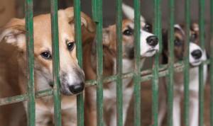 La Fondation débloque plus d'un million d'euros pour les animaux abandonnés