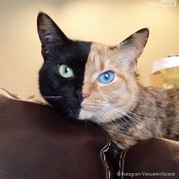 Venus, le chat aux deux visages garanti sans montage