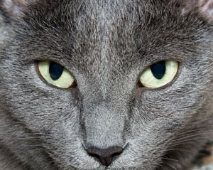 Une grande avancée scientifique dans la connaissance du chat