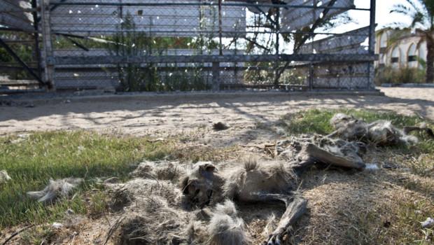 A Gaza, les animaux aussi meurent
