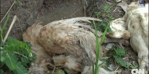Il vivait avec près de 2 000 animaux, morts et vivants