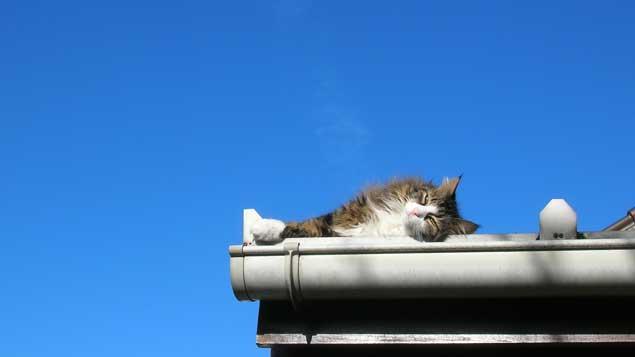 Pourquoi un chat peut-il sauter quatre fois sa hauteur ?