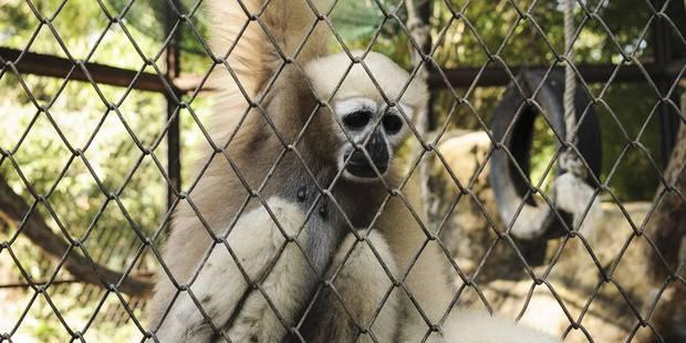 Ce zoo où les animaux meurent mystérieusement