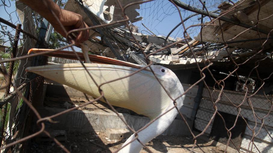 Plus de 80 animaux morts au zoo de Gaza en raison des bombardements