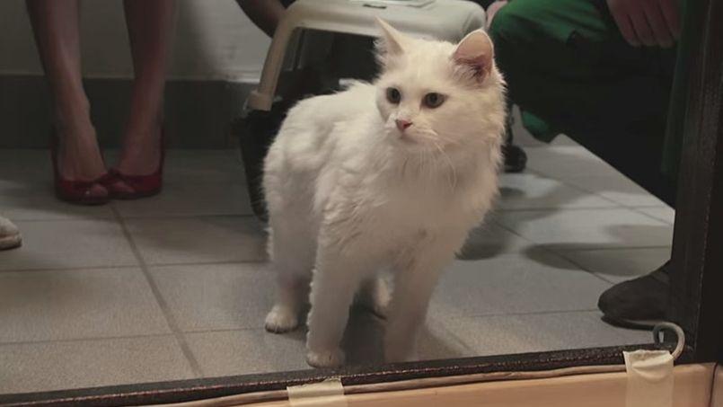 Une banque russe prête un chat pour tout emprunt immobilier