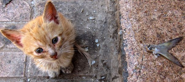Un chat ranimé par un pompier à Berlin