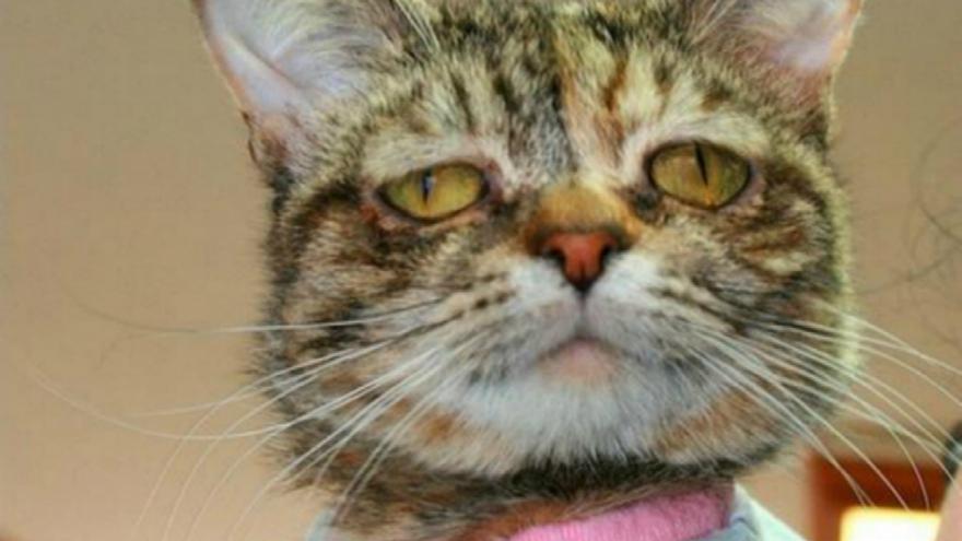 Le chat le plus triste du monde fait fondre les internautes