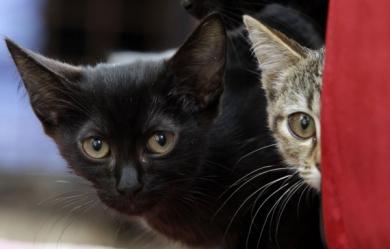 """La """"chasse aux chats"""" vit ses derniers jours"""