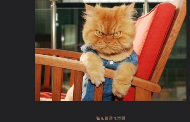 Garfi, le chat qui tire encore plus la tronche que Grumpy cat