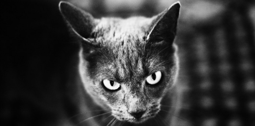Comment les chats perçoivent-ils le monde ?