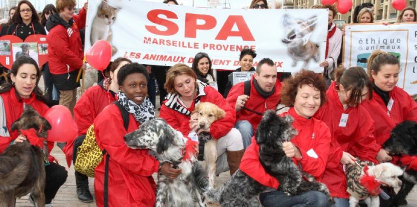 Les animaux domestiques seront-ils bientôt définitivement reconnus comme des êtres sensibles ?