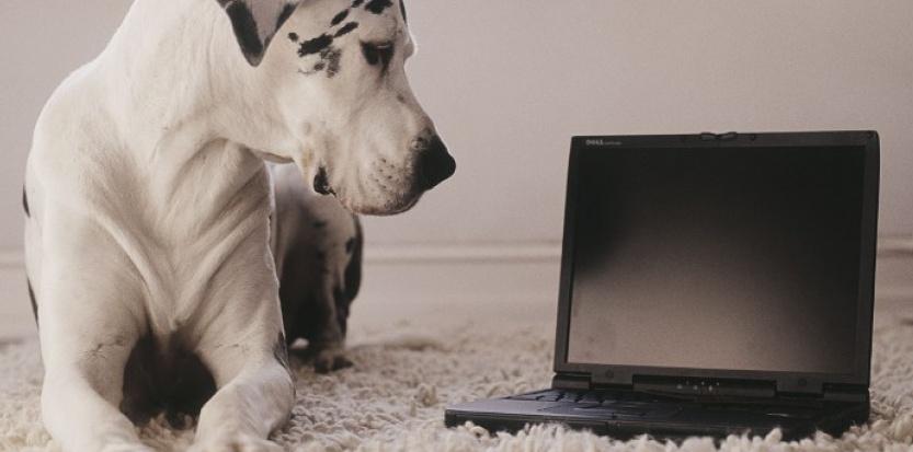 Les nouvelles technologies au service des animaux