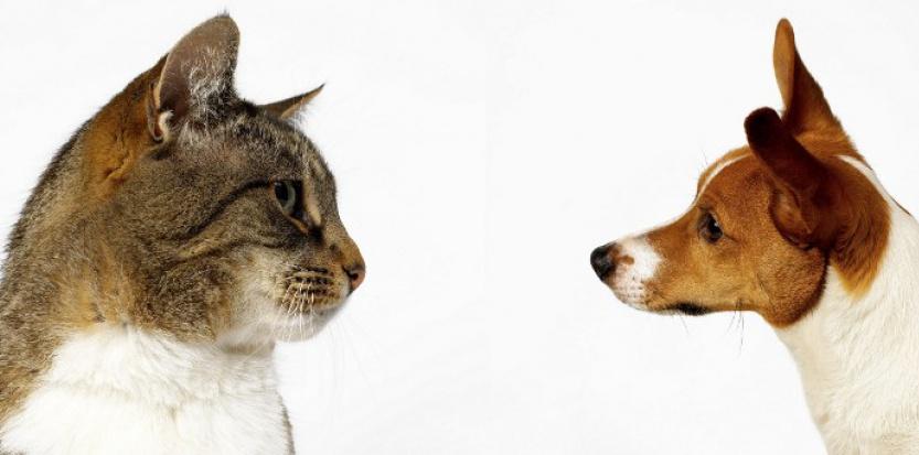 Propriétaire de chat vs propriétaire de chien : qui est le plus intelligent ?