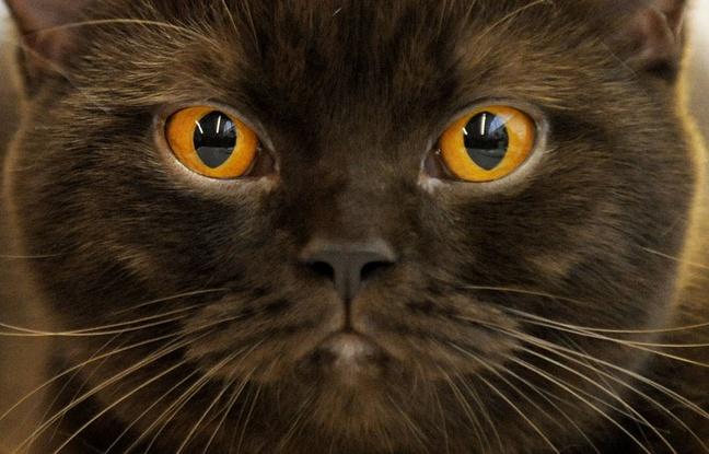 Lille: Un chat retrouve ses propriétaires... sept ans après sa disparition